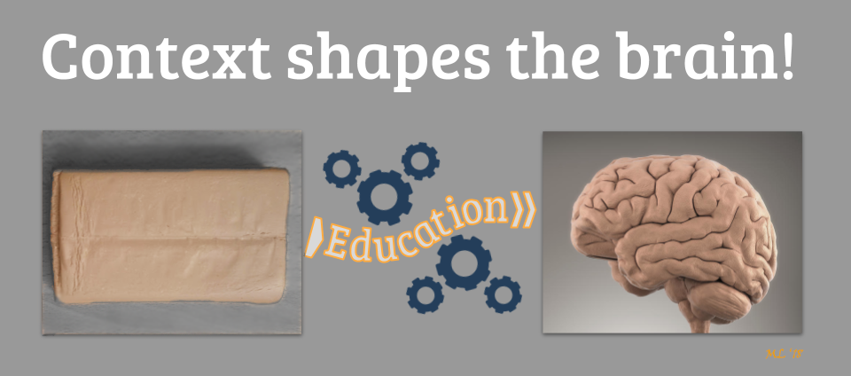 Context shapes the brain